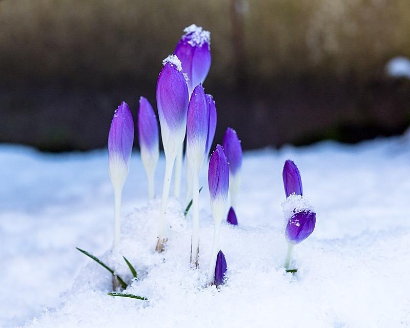 180227-untitled0001-5135 - Plants & Flowers
