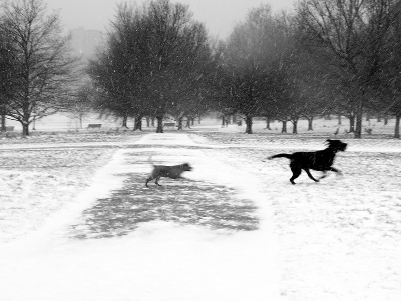 Primrose Hill snow series - London street photography photos 4