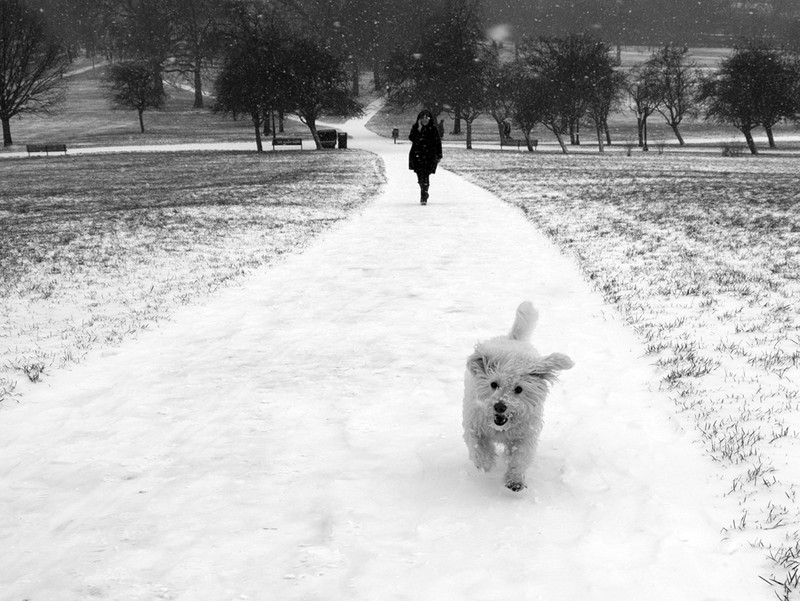Primrose Hill snow series - London street photography photos 2
