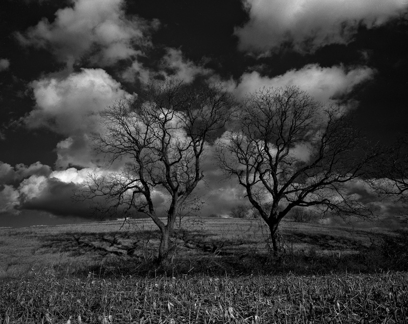 TWO OAKS IN WINTER - BLACK AND WHITE LANDSCAPES