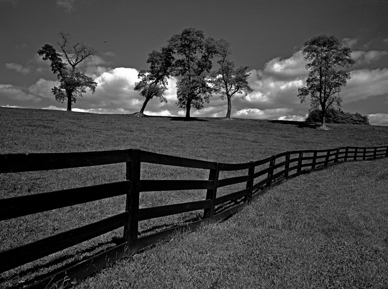 SEPTEMBER OAKS - BLACK AND WHITE LANDSCAPES
