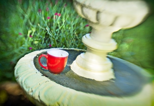 Coffee Cup Resting - The Backyard Series