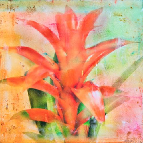 Bromeliad - Veiled Flowers