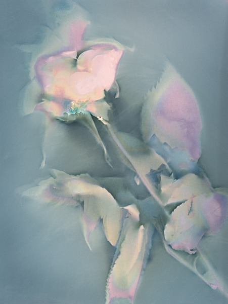Rose #1 - Ghost Flowers