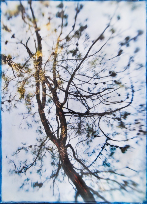 trees, encaustic, photograph - Among the Trees