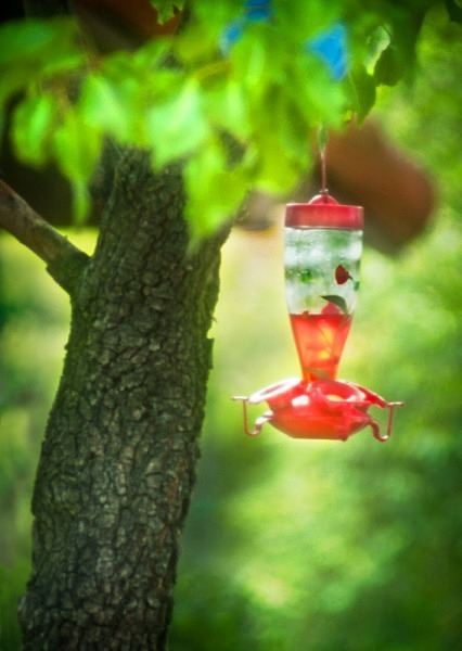 Hummingbird Haven - The Backyard Series