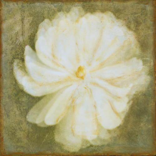 Magnolia - Veiled Flowers