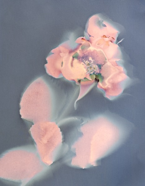 Rose #2 - Ghost Flowers