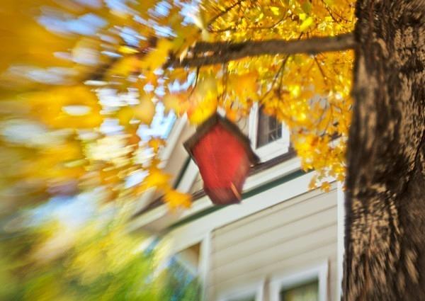 Scarlet Birdhouse - The Backyard Series