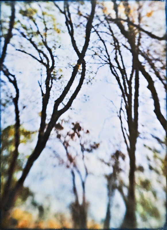 - Among the Trees