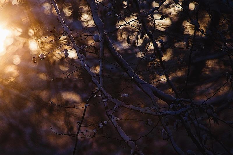 Winter light - Portfolio