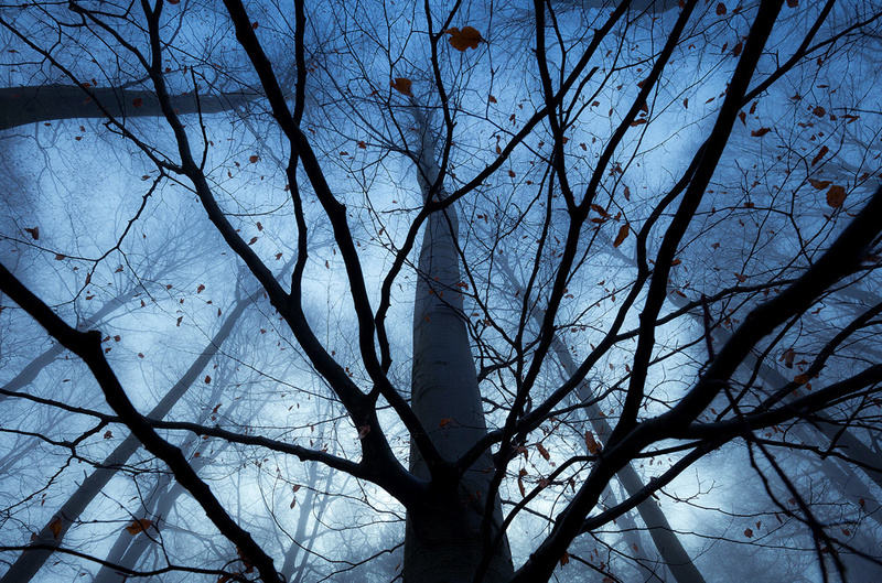 Last Leaves - Portfolio