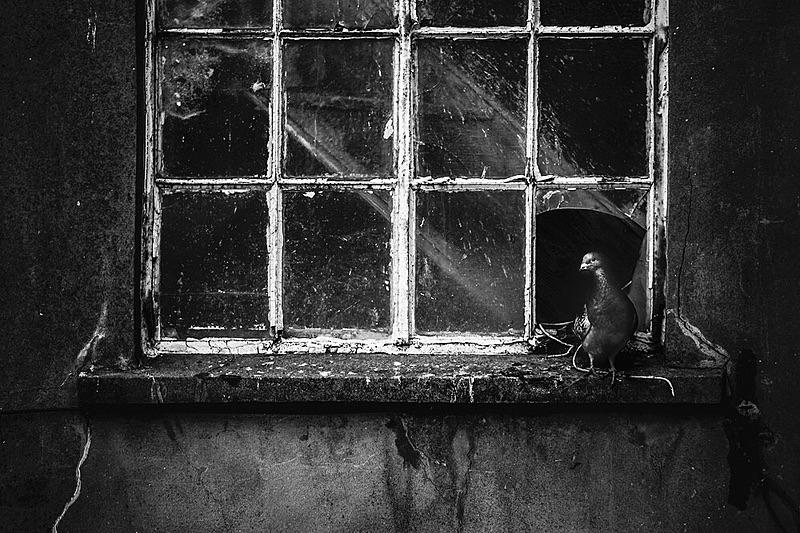 Bristol Pigeon - Portfolio