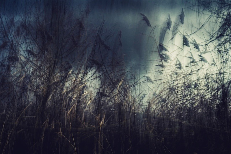 Edge of the pond - Portfolio