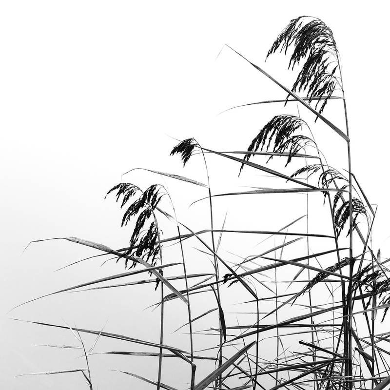 Reeds - Portfolio