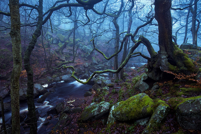 Padley Gorge - Portfolio