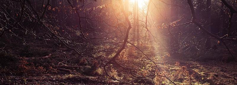 Sunset - Portfolio