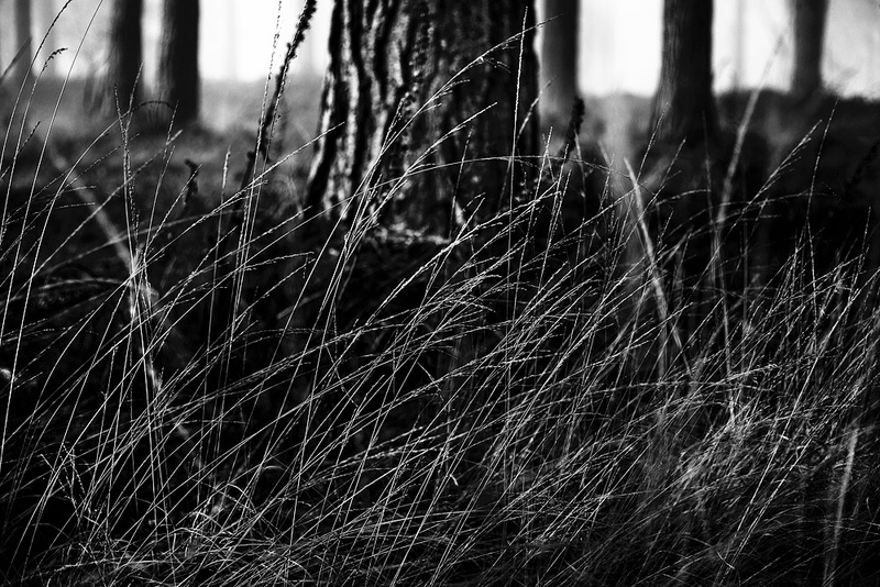 Dark Woods - Portfolio
