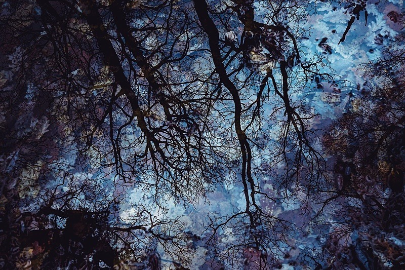 Woodland Reflection - Portfolio
