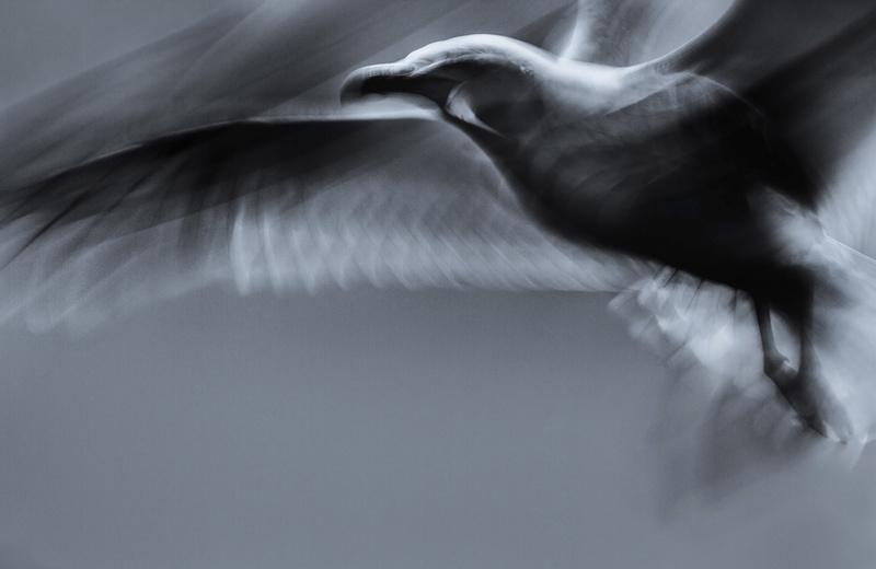 Gull - Portfolio