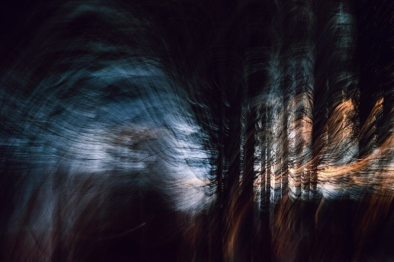 Windy woods - Portfolio