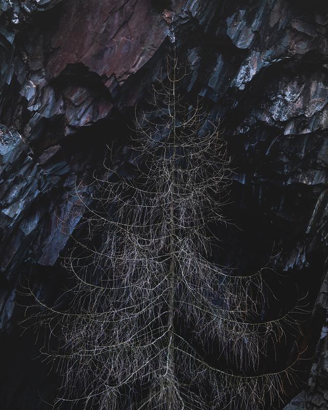 Dead Tree - Portfolio