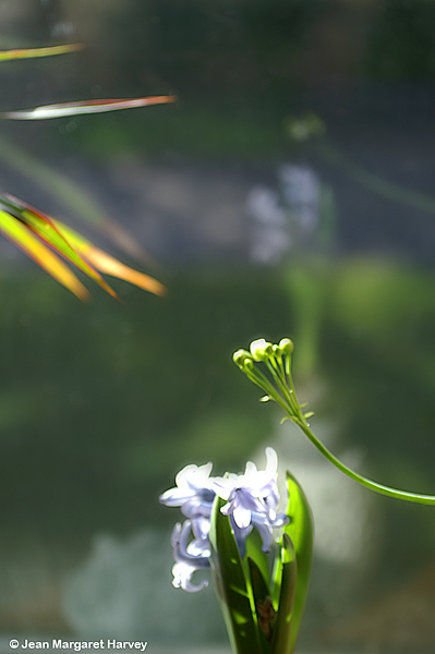 Flowers 16 - 04 - Flowers 16