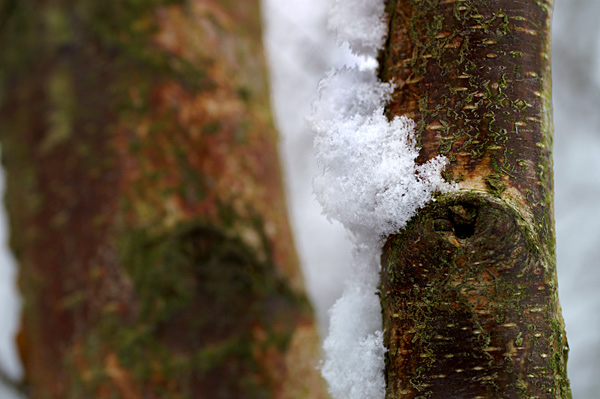 Snow - 13 - Snow