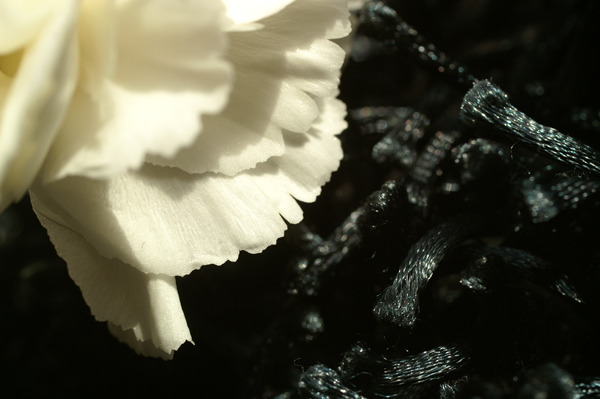 Flowers Set 03 - 07 - Flowers 03