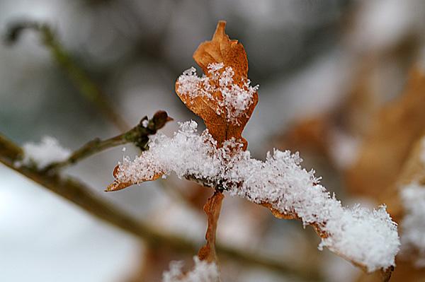 Snow - 01 - Snow