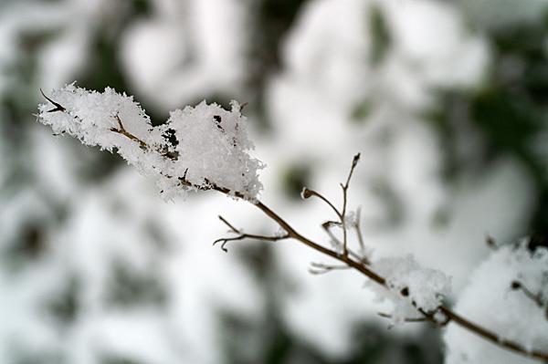 Snow - 26 - Snow