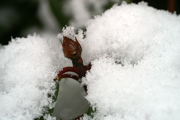 Snow - 07 - Snow