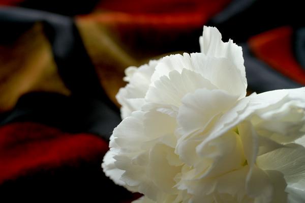 Flowers Set 2 - 11 - Flowers 02