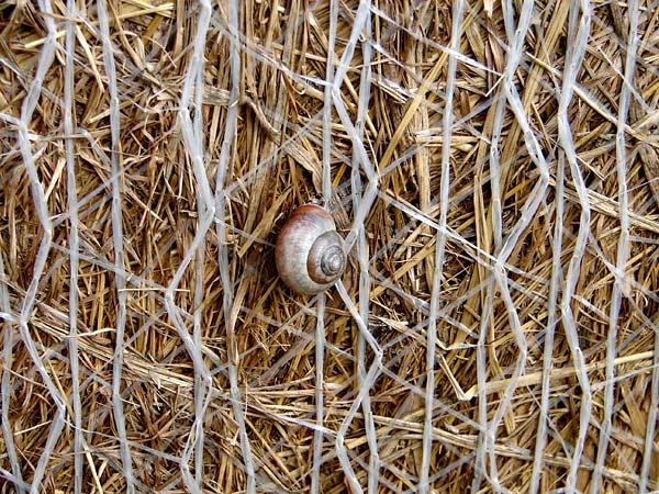Crabtree - 02 - Near Crabtree
