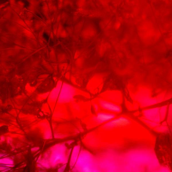 Flowers Set 14 - 12 - Flowers 14