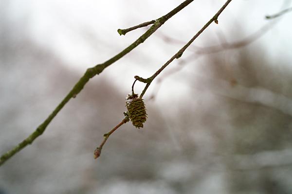 Snow - 04 - Snow