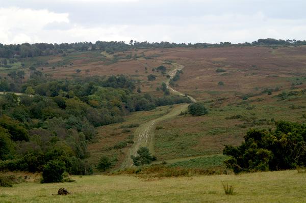Ashdown Forest 13 - Ashdown Forest