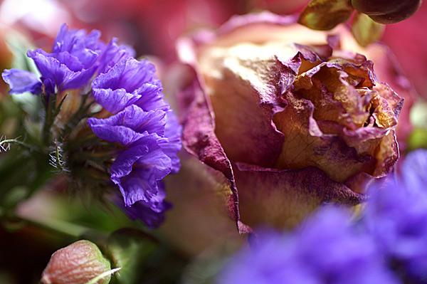 Flowers Set 12 - 12 - Flowers 12