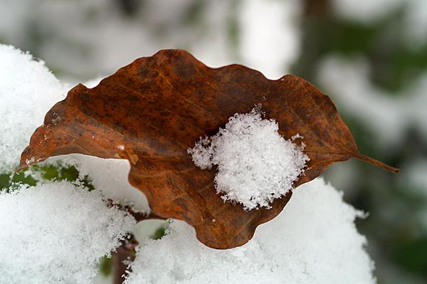 Snow - 27 - Snow