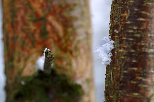 Snow - 12 - Snow