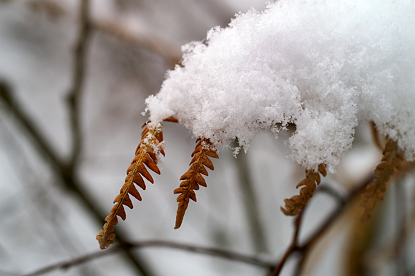 Snow - 19 - Snow