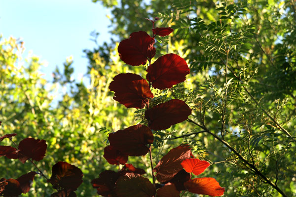 Buchan Park - 04 - Buchan Park