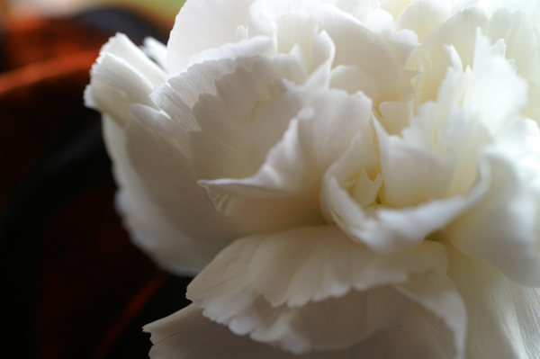 Flowers Set 2 - 09 - Flowers 02