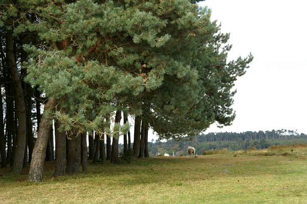 Ashdown Forest 09 - Ashdown Forest