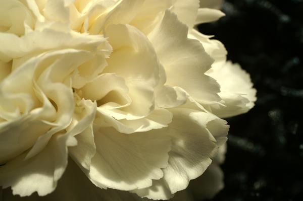 Flowers Set 03 - 06 - Flowers 03