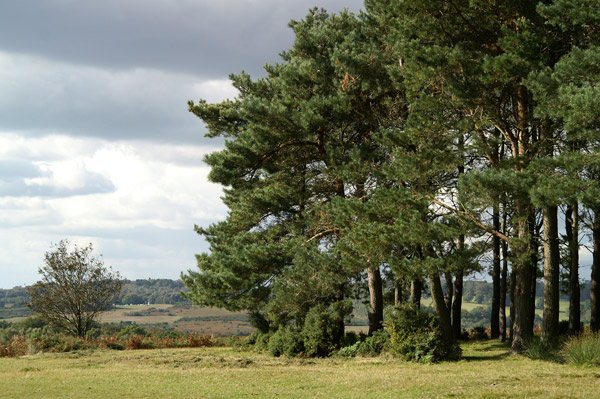 Ashdown Forest 08 - Ashdown Forest