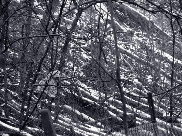 - Winter - tinted