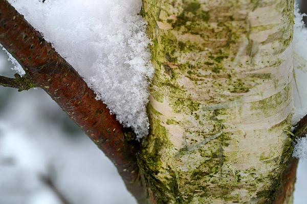 Snow - 08 - Snow