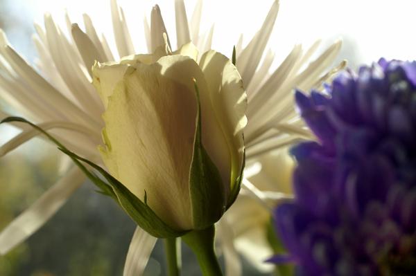 Flowers Set 1 - 10 - Flowers 01