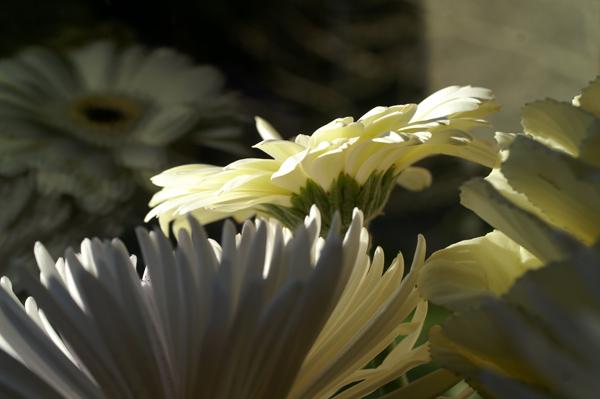 Flowers Set 1 - 02 - Flowers 01